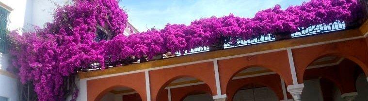 Visita Sevilla: Flores y plantas de Sevilla en Primavera