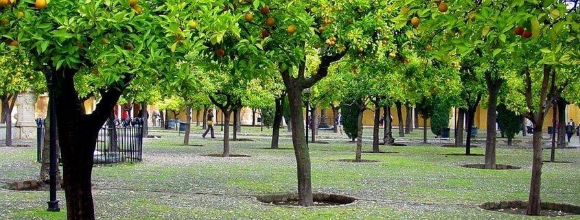 Guía de curiosidades de Sevilla: Las naranjas en invierno